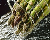 Green asparagus being washed