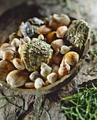 Assorted shells in a bowl