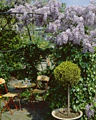 Idyllic wisteria-covered pergola
