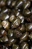 Snails (Speciality of Hanoi, Vietnam)
