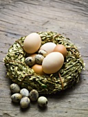 Various kinds of eggs