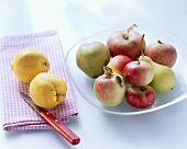 Apples, pears, quinces