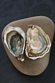 Oysters (spéciale et fine de claire, Marennes Oléron, France)