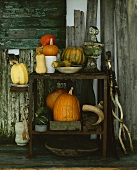 Assorted squashes and pumpkins on garden shelves