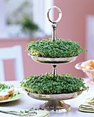 Garden cress in decorative metal stand on dining table