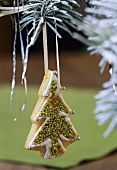 Lemon Christmas tree biscuit hanging on a fir branch