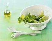 Frisch gewaschene Salatblätter in Seiher