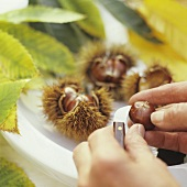 Scoring sweet chestnuts with a knife