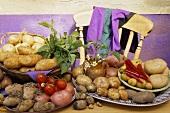 Various varieties of potatoes and tomatoes