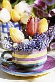 Grape hyacinths and tulips in striped cup and saucer