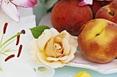 Peaches on a plate with apricot-coloured rose