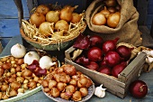 Various types of onions on a wooden table