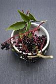 A bowl of elderberries