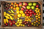 Various types of organic tomatoes in a wooden crate