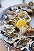 Fresh oysters from France
