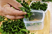 Parsley being put into plastic boxes
