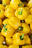 Lots of yellow peppers