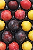 Colourful plums in a box
