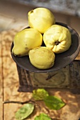 Four quinces on an antique scale