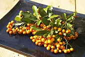 Sea buckthorn with leaves on a dark platter