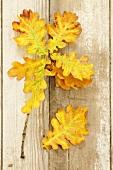 Herbstliche Eichenblätter auf Holzuntergrund