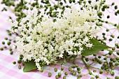 Elderflowers and unripe berries