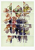 Grapes x 12