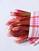 Fresh rhubarb wrapped in a dish cloth