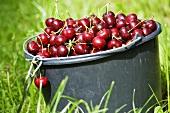 A bucket of sweet cherries