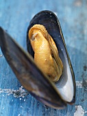 A fresh mussel from Barfleur (Normandy)