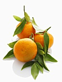 Three mandarin oranges with leaves