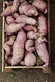 Sweet potatoes in a crate, seen from above
