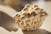 Buna shimeji mushrooms