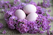 A wreath of lilac primroses with Easter eggs