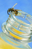 A bee on the edge of a jar of honey