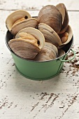 Fresh clams in a metal bucket