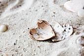 Hearts made of bark on the beach