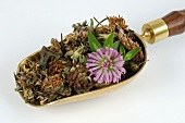 Dried red clover with one fresh flower