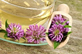 Red clover tea with flowers in a small scoop