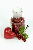Haws (hawthorn fruits) with red heart