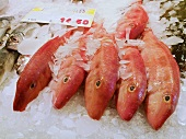 Fresh red mullet on a market stall