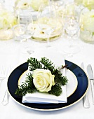 Festive place-setting with fir sprigs and white rose