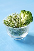 Broccoli sprouts and broccoli florets