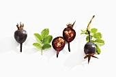 Burnet rose hips (black rose hips)
