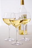 Drei Gläser Gutedel mit Flasche aus dem Markgräflerland
