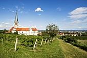 Wine town of Gumpoldskirchen, Vienna, Austria
