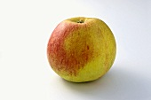 'Alkmene' apple