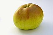 'Signe Tillisch' apple, an old variety