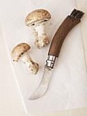 Mushroom knife with two mushrooms