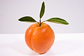 An apricot with leaves